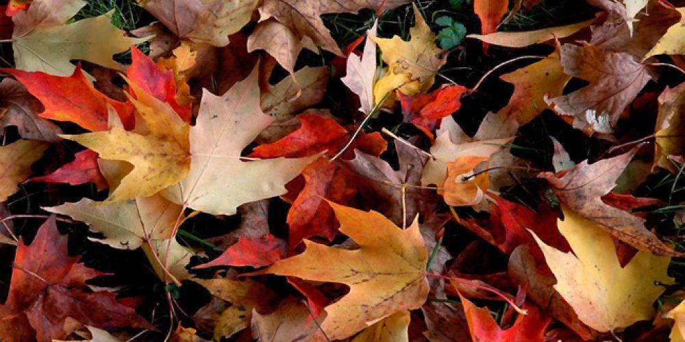 Chegada do outono