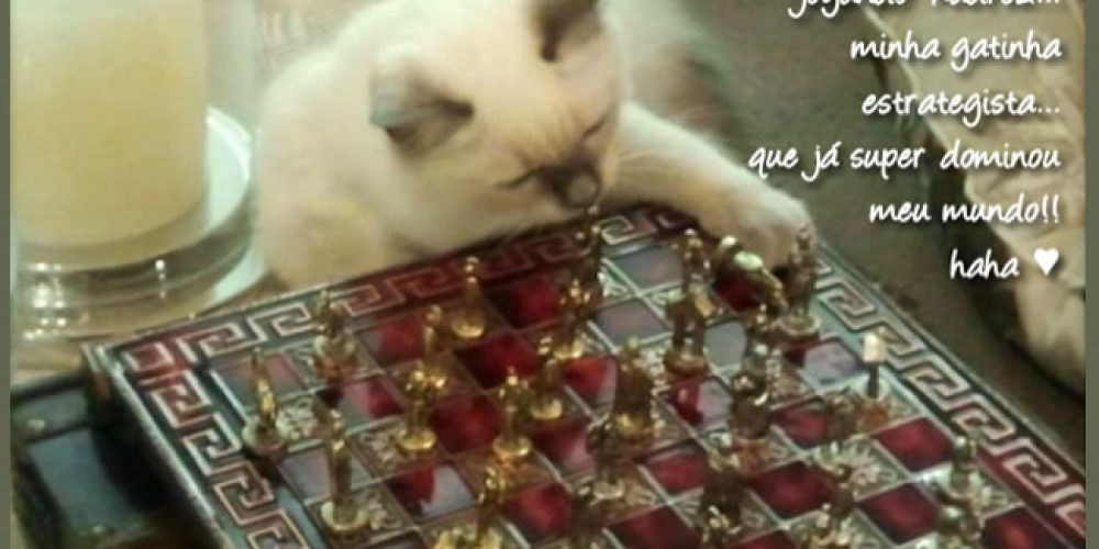 Magia Felina… Simplesmente Gatos…