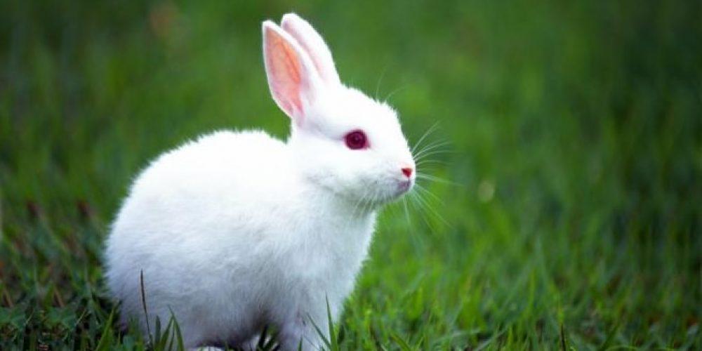 Você ja teve um coelho de estimação? Oportunidades únicas e ímpares