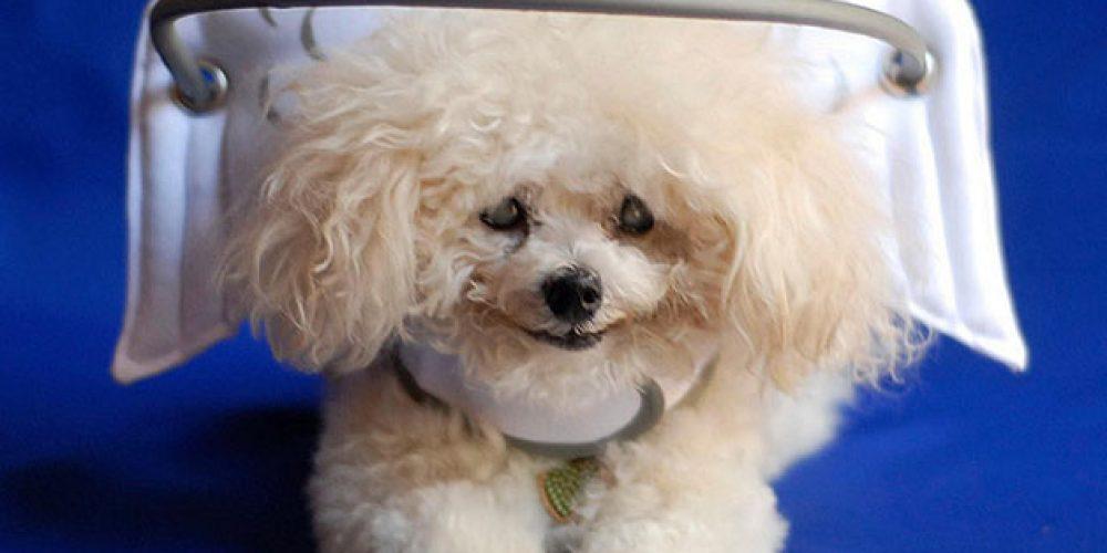 Tecnologia que ajuda os cães cegos