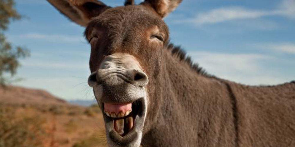 """""""Cuidado com os burros motivados"""""""