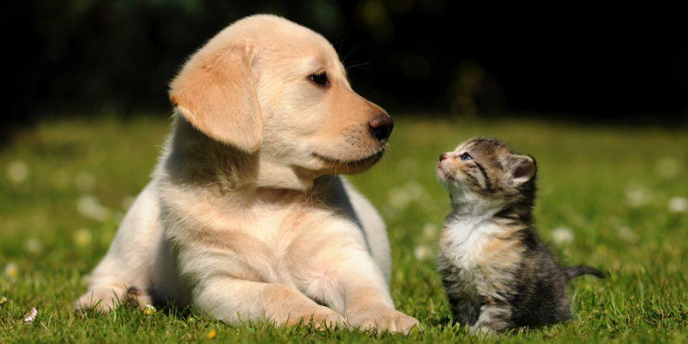 Celebridades e seus Pets
